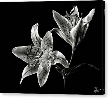 Stargazer Lily In Black And White Canvas Print by Endre Balogh