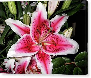 Stargazer Canvas Print by Maria Keady