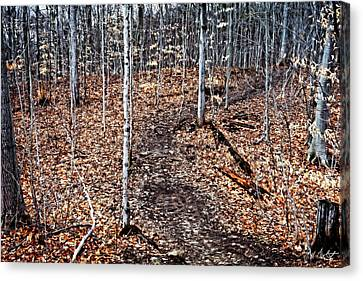 Starkey Hill Path Canvas Print