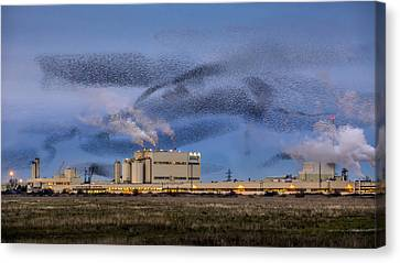 Starling Mumuration Canvas Print by Ian Hufton