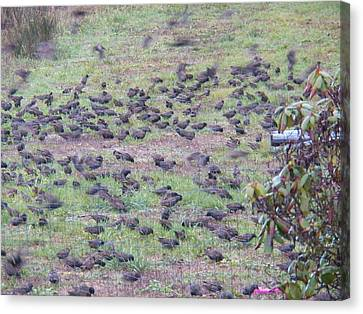Starlings Canvas Print by Laurie Kidd