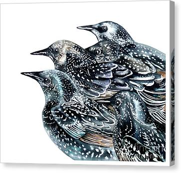 Starlings Canvas Print by Marie Burke