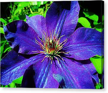 Canvas Print featuring the photograph Starry Bloom by Susan Carella