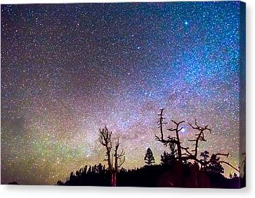 Starry Universe Canvas Print by James BO  Insogna