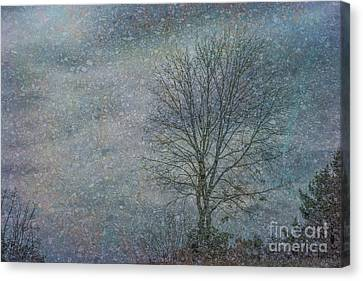 Stars Of Stone Canvas Print
