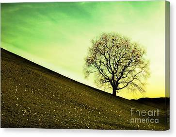 Starting Springtime Canvas Print by Hannes Cmarits
