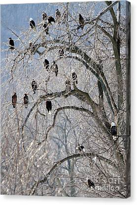 Starved Rock Eagles Canvas Print by Paula Guttilla