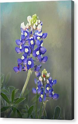 Canvas Print featuring the photograph State Flower Of Texas by David and Carol Kelly