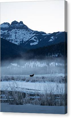 Statuesque Moose // Round Prairie, Yellowstone National Park Canvas Print by Nicholas Parker