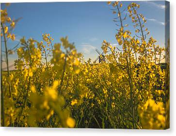 Stealthy Approach Canvas Print by Chris Fletcher