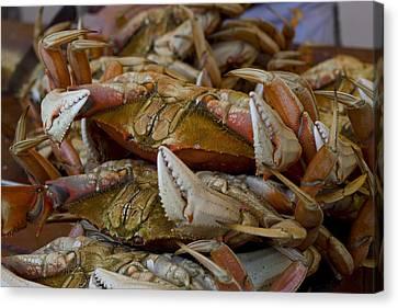 Steamed Crab Canvas Print