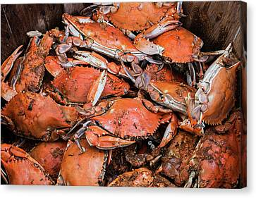 Steamed Crabs Canvas Print by Brian Wallace