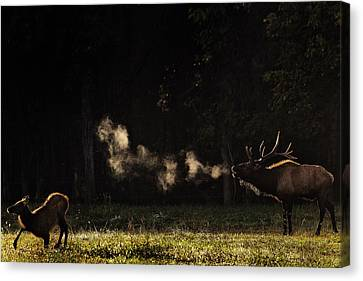 Steamy Breath Elk Bugle Canvas Print by Michael Dougherty