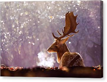Steamy Stag Canvas Print by Roeselien Raimond