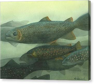 Steelhead Canvas Print by Anne Havard