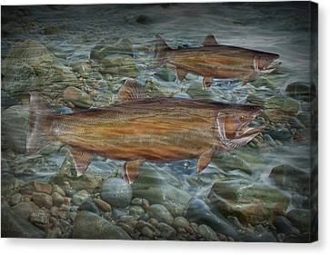 Steelhead Trout Fall Migration Canvas Print by Randall Nyhof