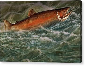 Steelhead Trout Fish No.143 Canvas Print by Randall Nyhof