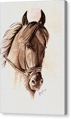 Steely Black Stallion Canvas Print by Remy Francis