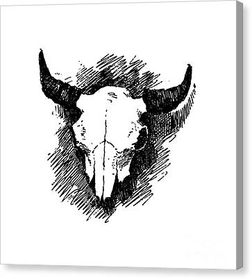 Steer Skull Tee Canvas Print by Edward Fielding