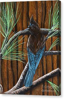 Stellar Jay Canvas Print by Jennifer Lake