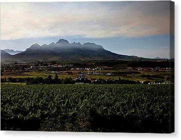 Stellenbosch Vineyard Canvas Print by Dale Halbur