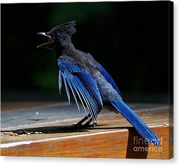 Stellers Jay Call Canvas Print