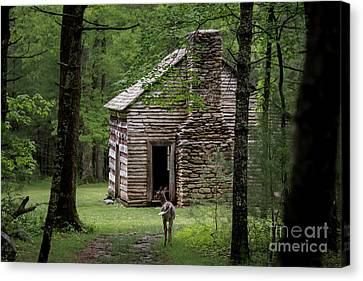 Step Back In Time Canvas Print by Andrea Silies
