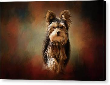 Stepping Into Autumn Yorkshire Terrier Art Canvas Print by Jai Johnson