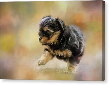 Step Into Spring Dog Art Canvas Print by Jai Johnson