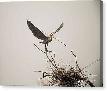 Canvas Print featuring the photograph Stick Man by David Bearden