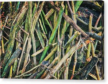 Stick Pile At Retzer Nature Center Canvas Print by Jennifer Rondinelli Reilly - Fine Art Photography
