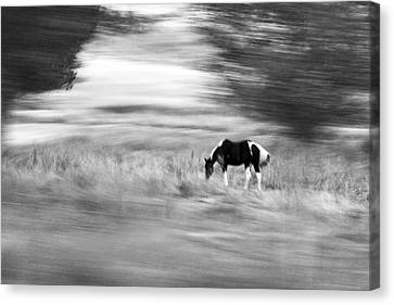 Still But In Motion Canvas Print by James Steele