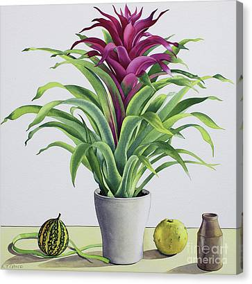Bromeliad Canvas Print - Still Life With Bromeliad by Christopher Ryland
