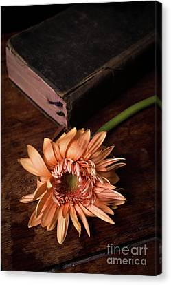 Still Life With Orange Flower And Old Bible Canvas Print