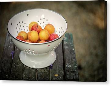 Still Life With Yellow Plums  Canvas Print by Nailia Schwarz