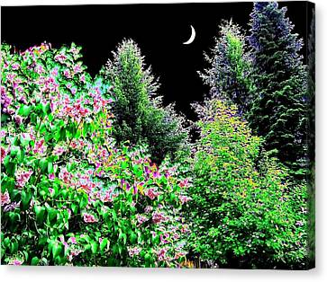 Still Of The Night Canvas Print by Will Borden