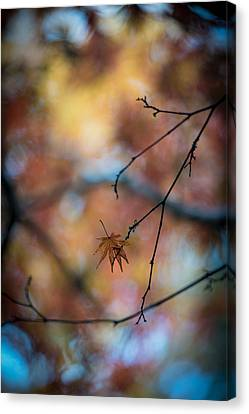 Still Together Canvas Print by Mike Reid