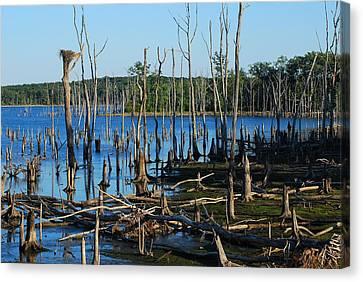 Still Wood - Manasquan Reservoir Canvas Print