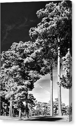 Stillness Canvas Print by Gerlinde Keating - Galleria GK Keating Associates Inc