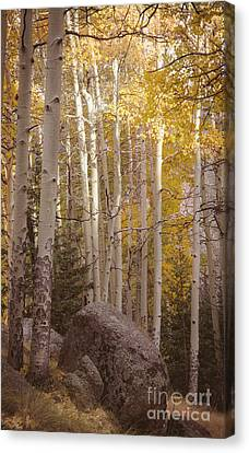Canvas Print featuring the photograph Stillness by The Forests Edge Photography - Diane Sandoval