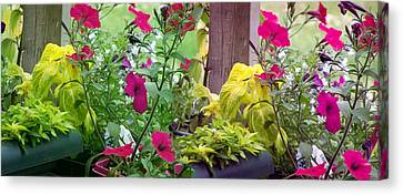 Stitched Flower Pot Photograph Canvas Print by Laurie Kidd