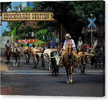 Cattle Drives Canvas Print - Stockyards Cattle Drive by David and Carol Kelly