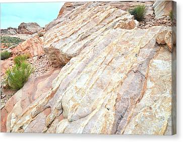 Canvas Print featuring the photograph Stone Feet In Valley Of Fire by Ray Mathis