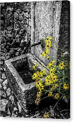 Stone Trough With Colour Selected Flowers Canvas Print by Steve Whitham
