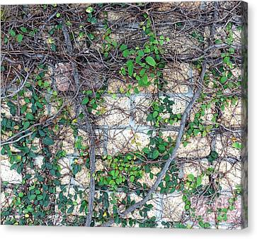 Canvas Print featuring the photograph Stone Wall Covered With Vines by Yali Shi