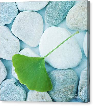 Stones And A Gingko Leaf Canvas Print by Priska Wettstein