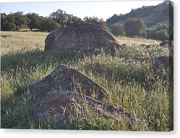 Stones In The Field Of Morning Canvas Print
