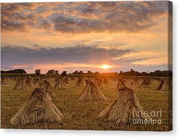Stook Sunset Canvas Print by Richard Thomas