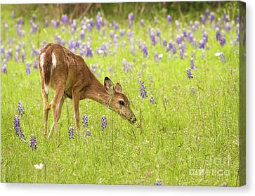 Stop And Smell The Bluebonnets. Canvas Print