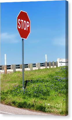 Stop For The Blue Bonnets Canvas Print by Joan Bertucci
